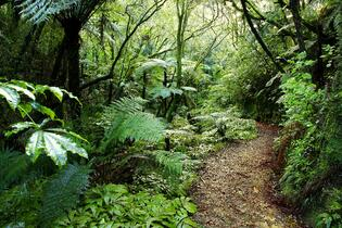 forest-path-new-zealand