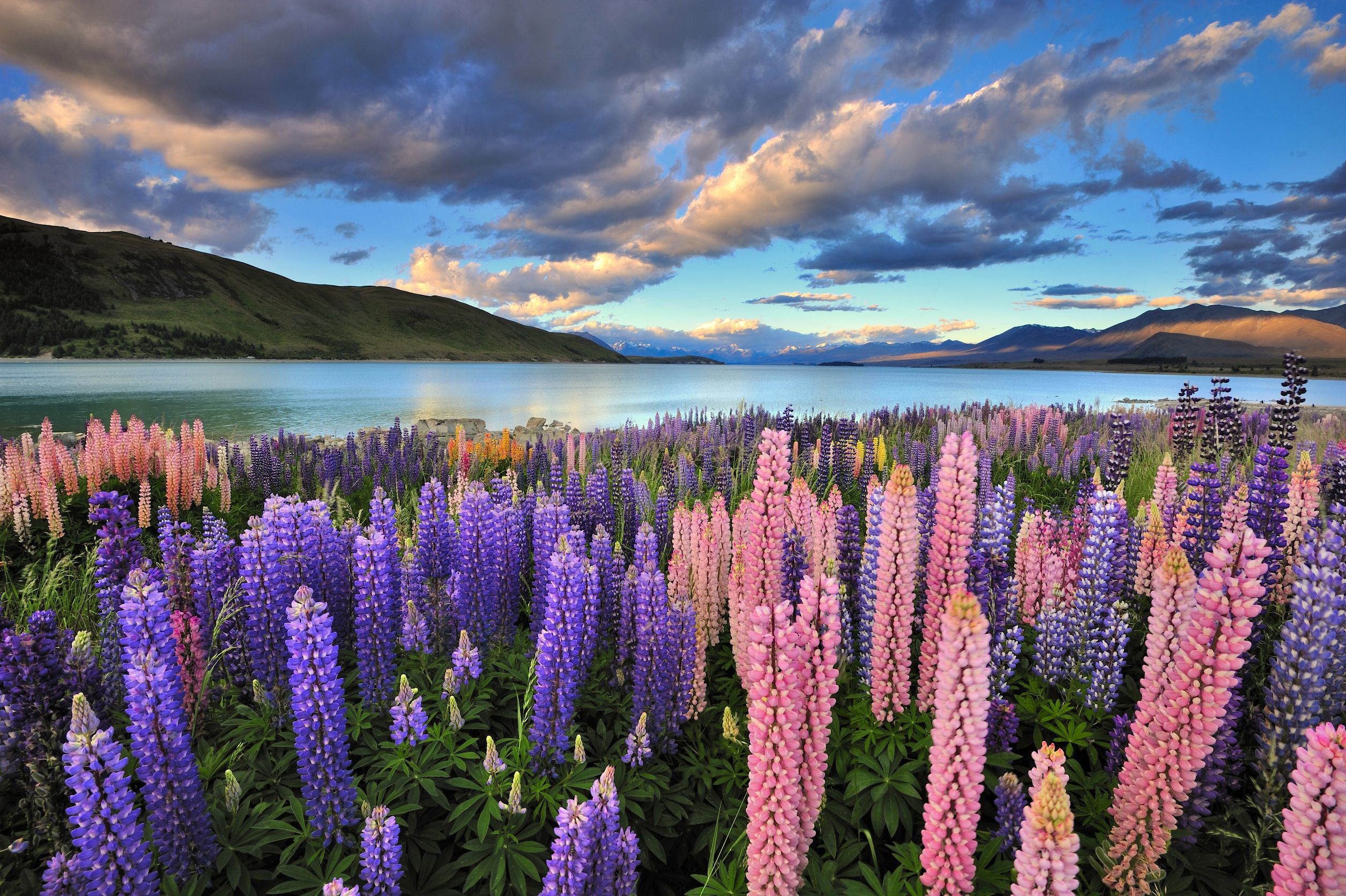 new zealand flowers and lake 123rf