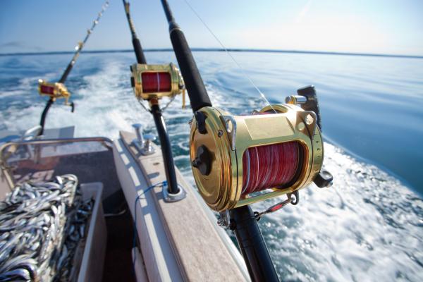 caribbean fishing poles 123rf resized 600