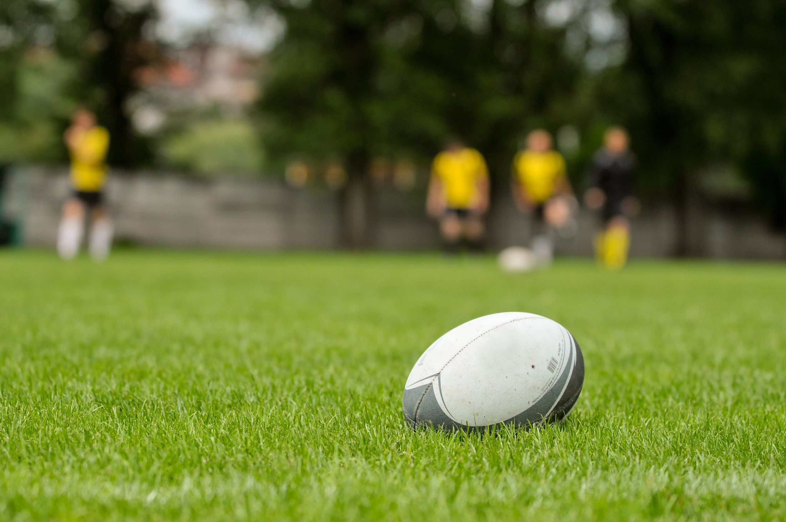 rugby-ball-on-field-grass-new-zealand