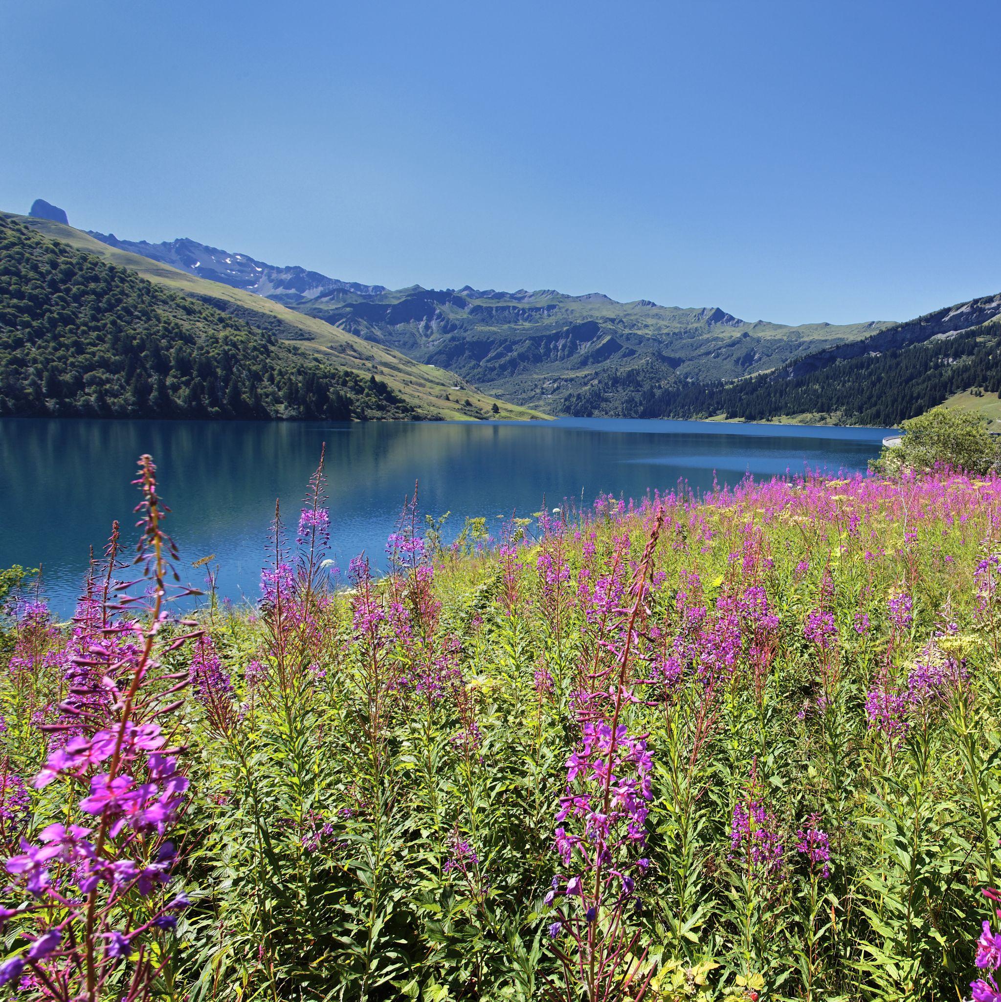 purple-flowers-and-lake-australia
