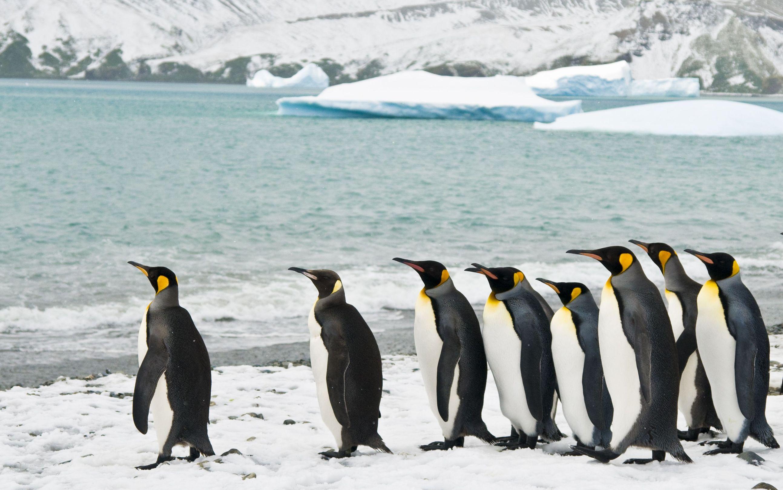 new zealand penguins and iceberg 123rf