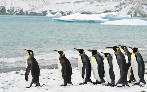 new zealand penguins and iceberg 123rf