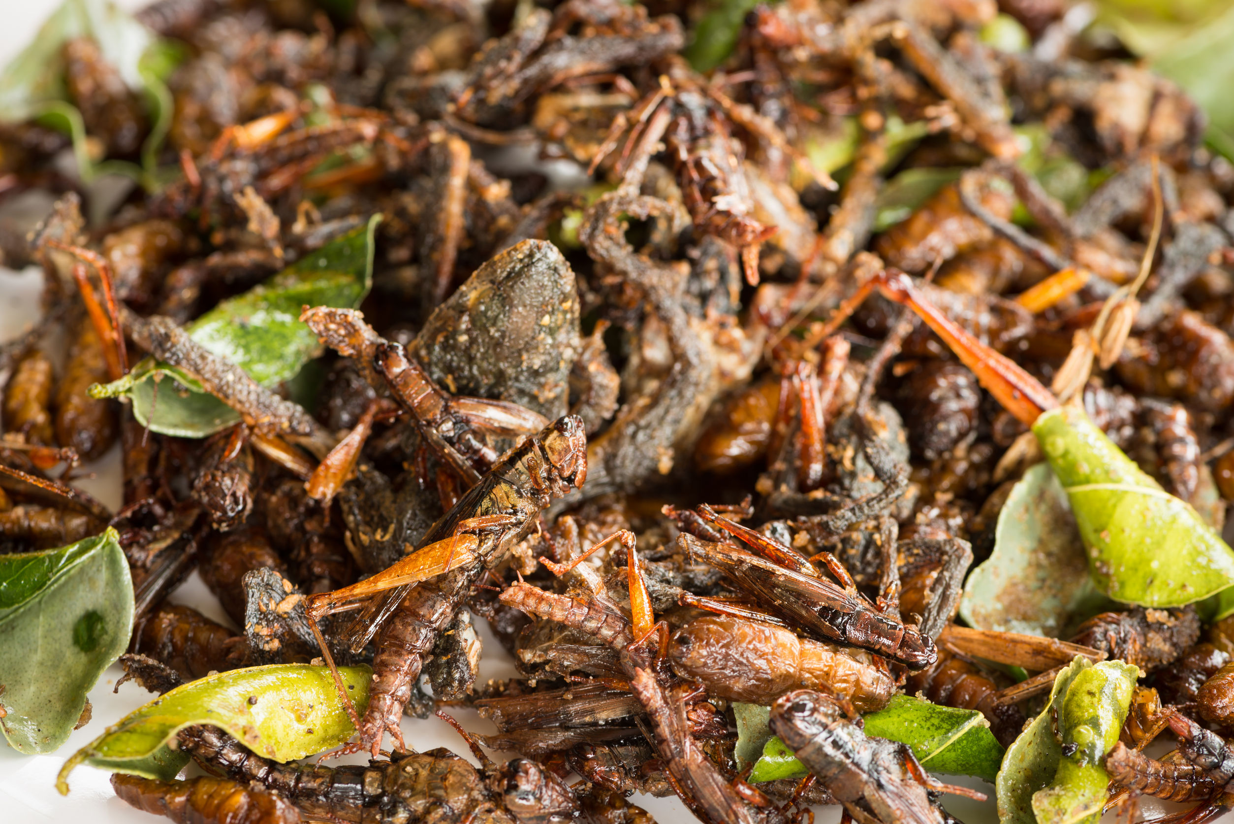 edible-insects-australia-new-zealand