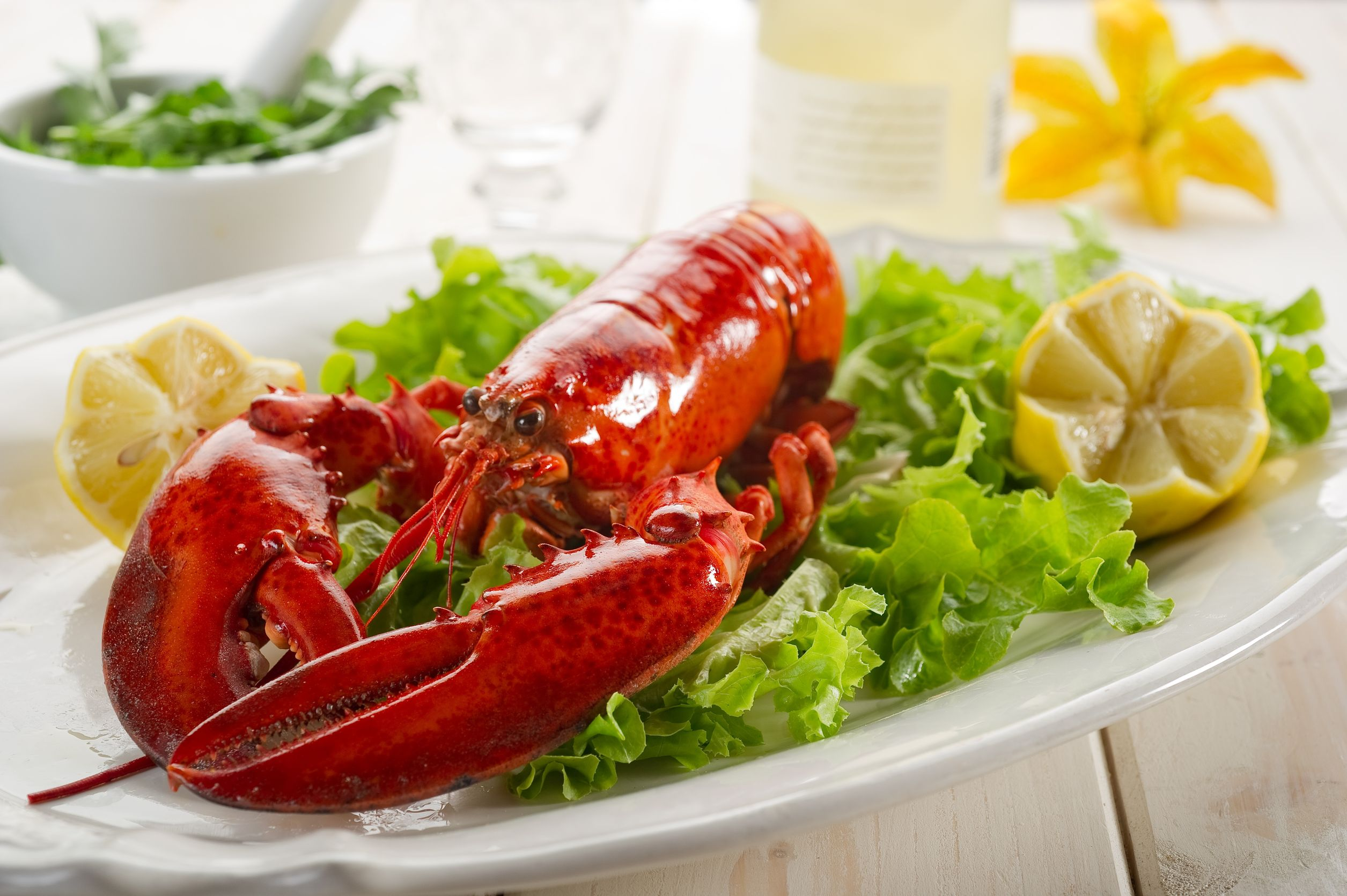 new zealand lobster on a plate 123rf