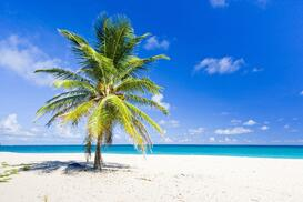 caribbean palm tree 123rf