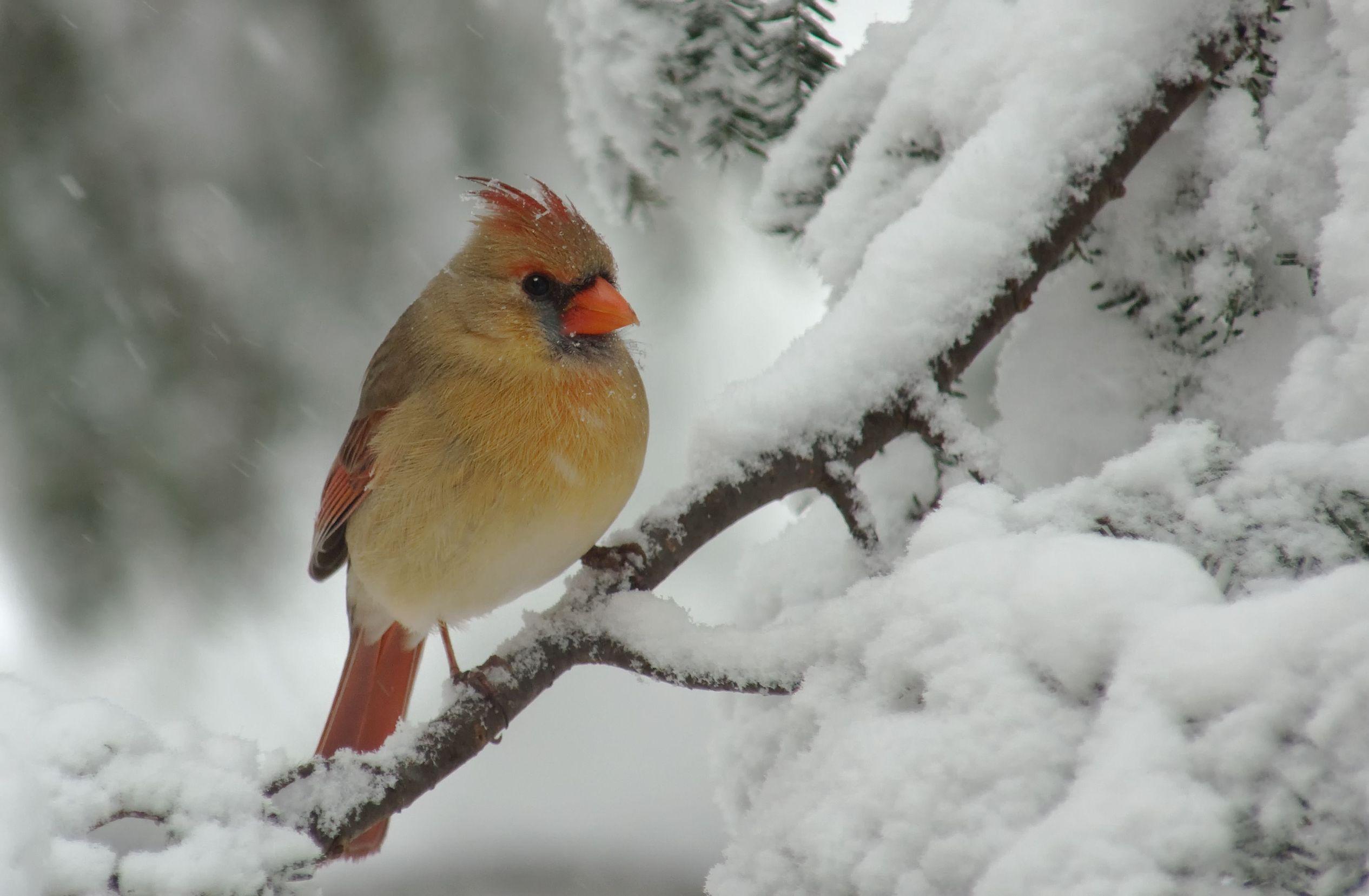 king-bird-usa