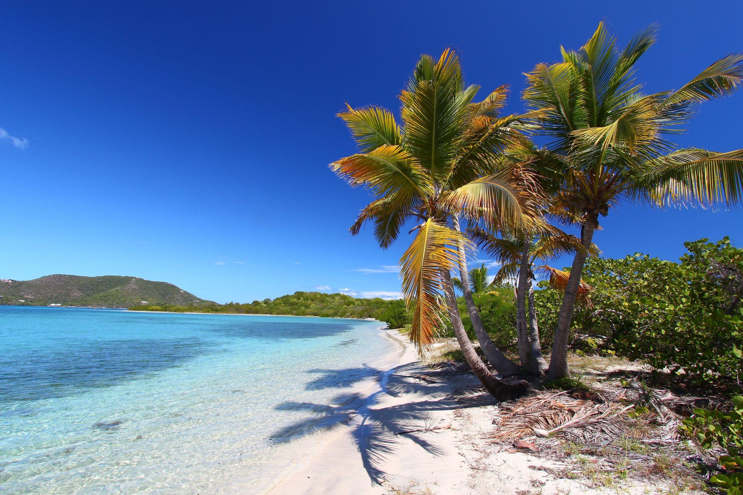 caribbean coastal trees 123rf