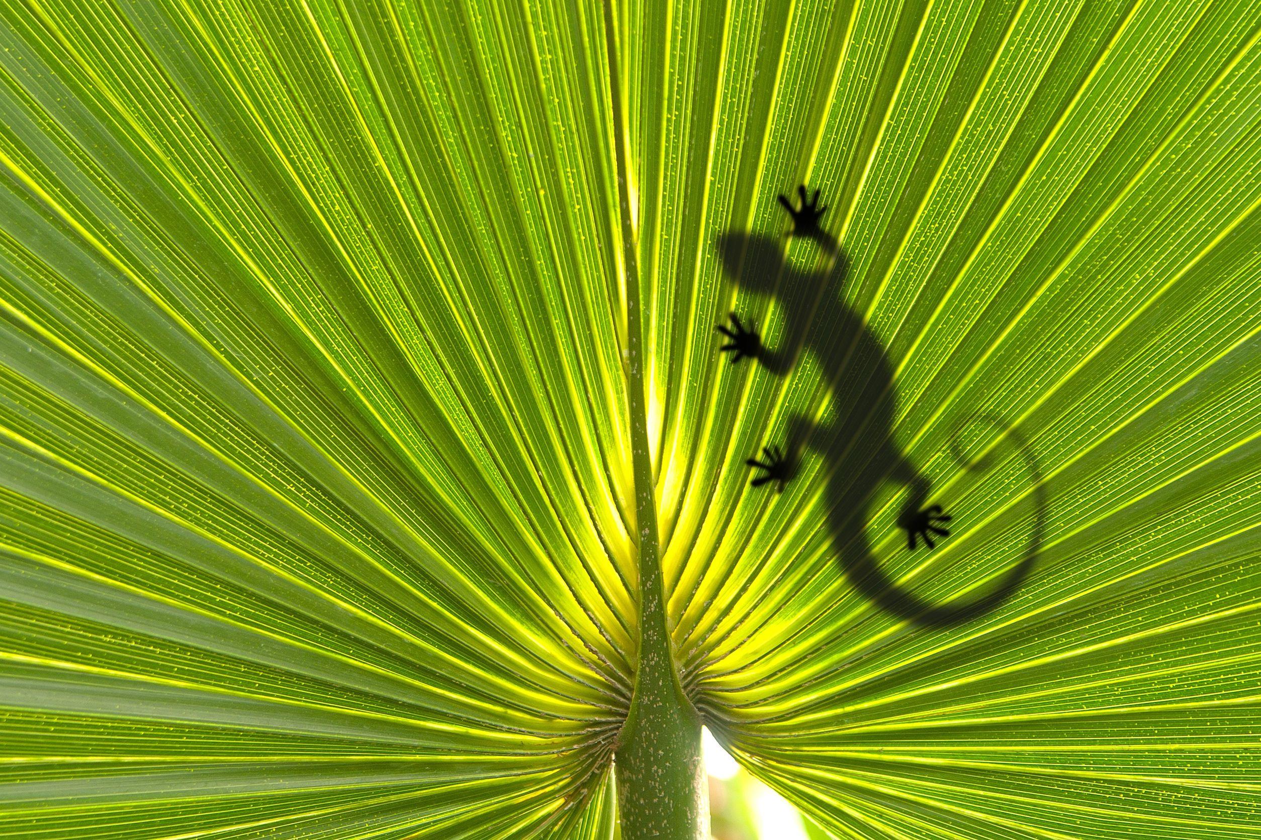 lizard-leaf-australia