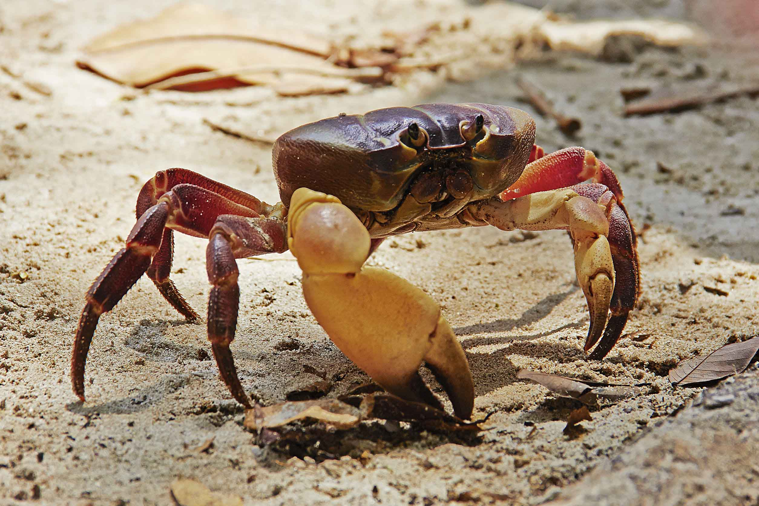 red-crab-beach