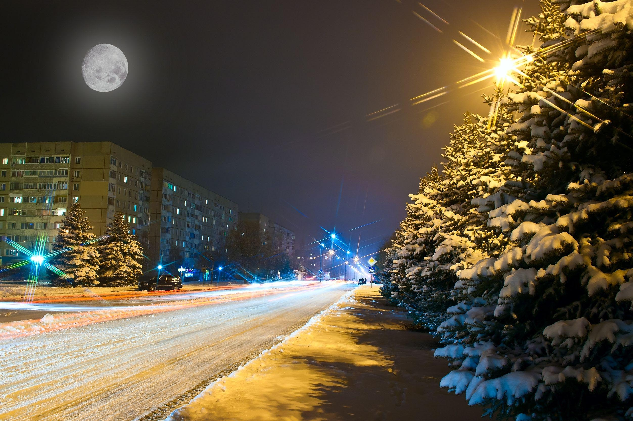 winter-street-new-york-trees