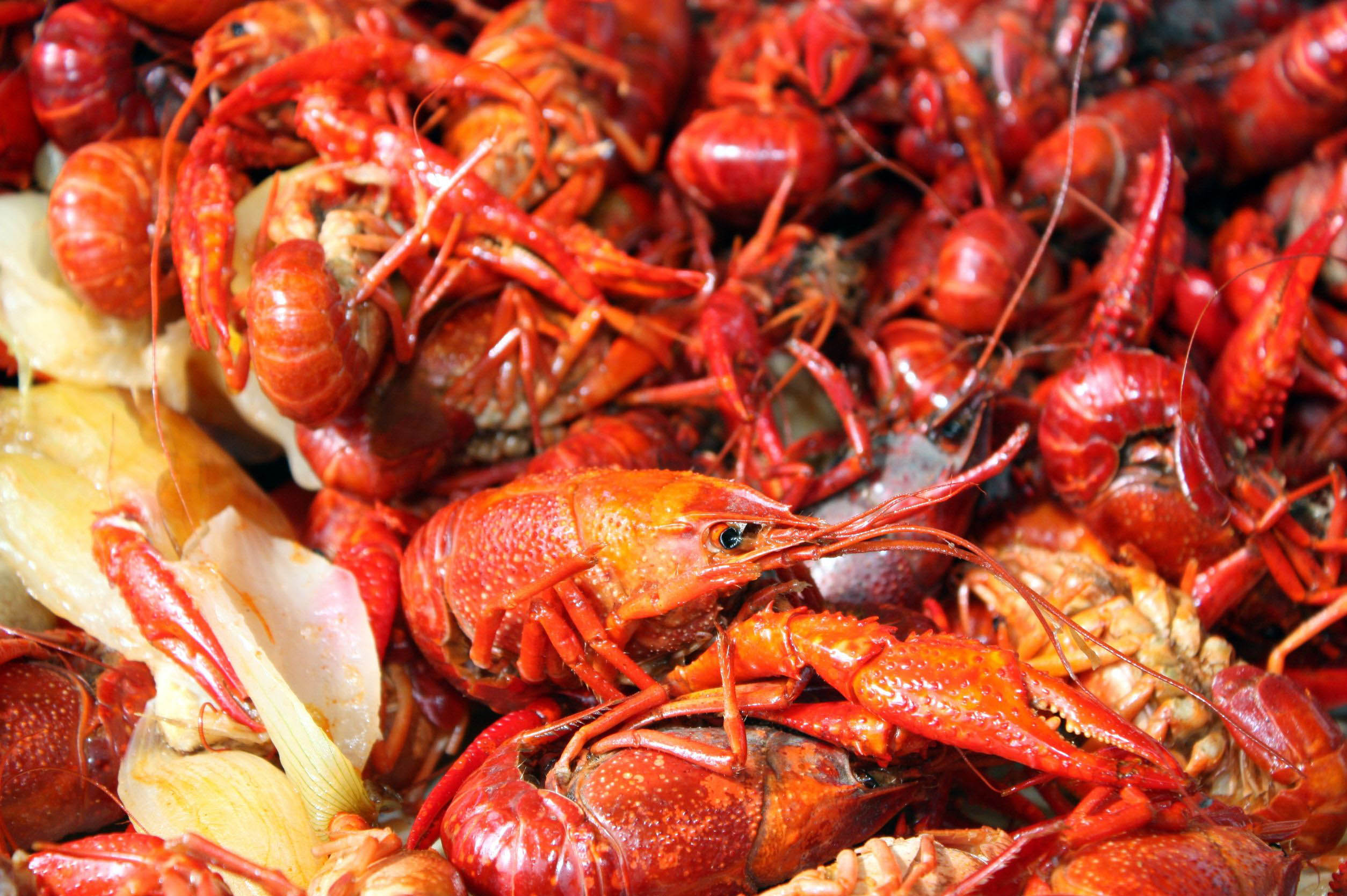 plate-of-crayfish