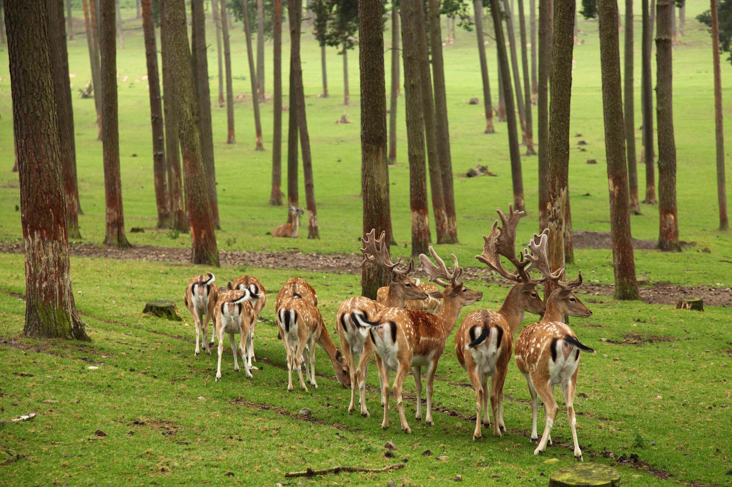 deer-in-forrest-united-states