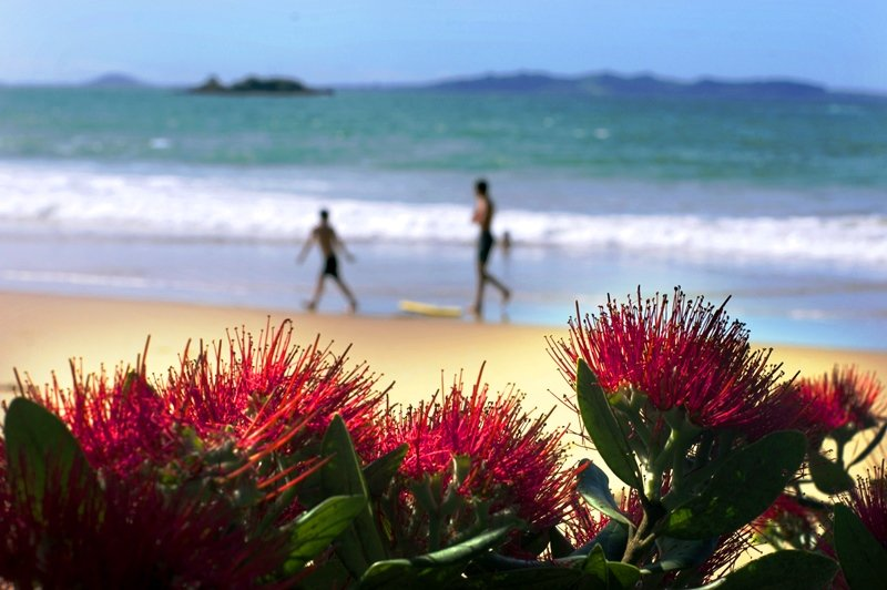 beach-in-new-zealand-with-pohutukawa-flowers