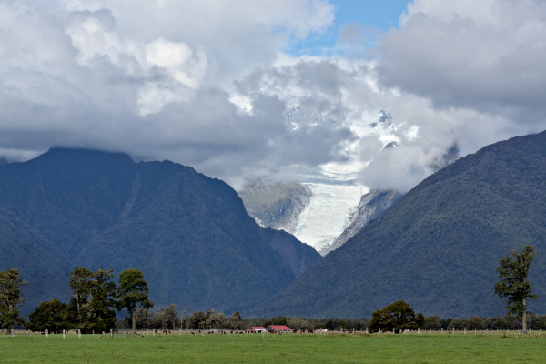 Looking up at Fox Glacier