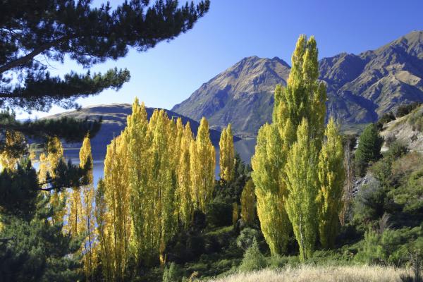 Autumn in Lake Wanaka