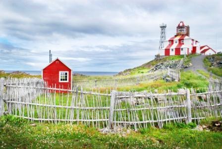 Puffins Newfoundland resized 600