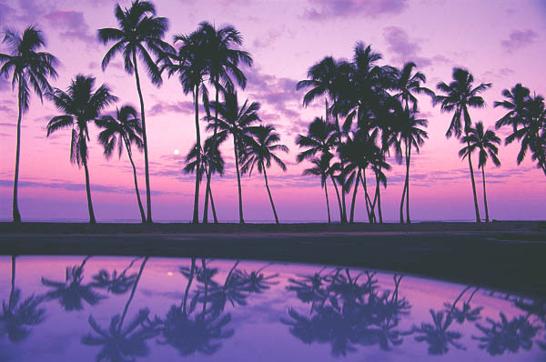 hawaii-palm-trees-thinkstock