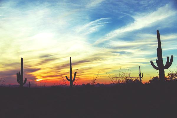 arizona cactus thinkstock