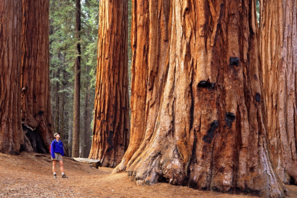 redwoods hike