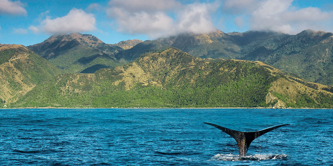 kaikoura_whale_watching_gmedical_istock.jpg
