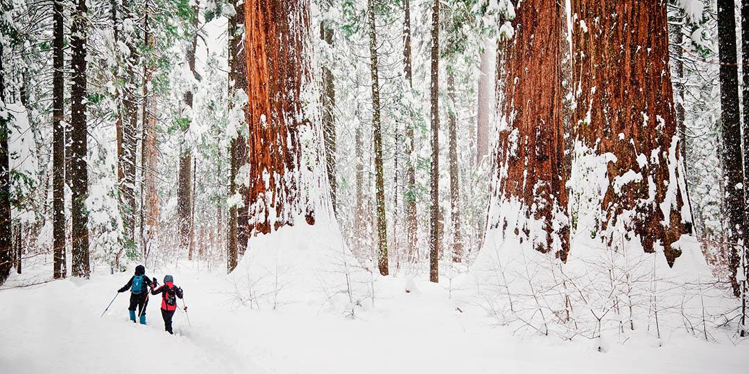 sequoia-national-park-winter-gmedical-istock.jpg