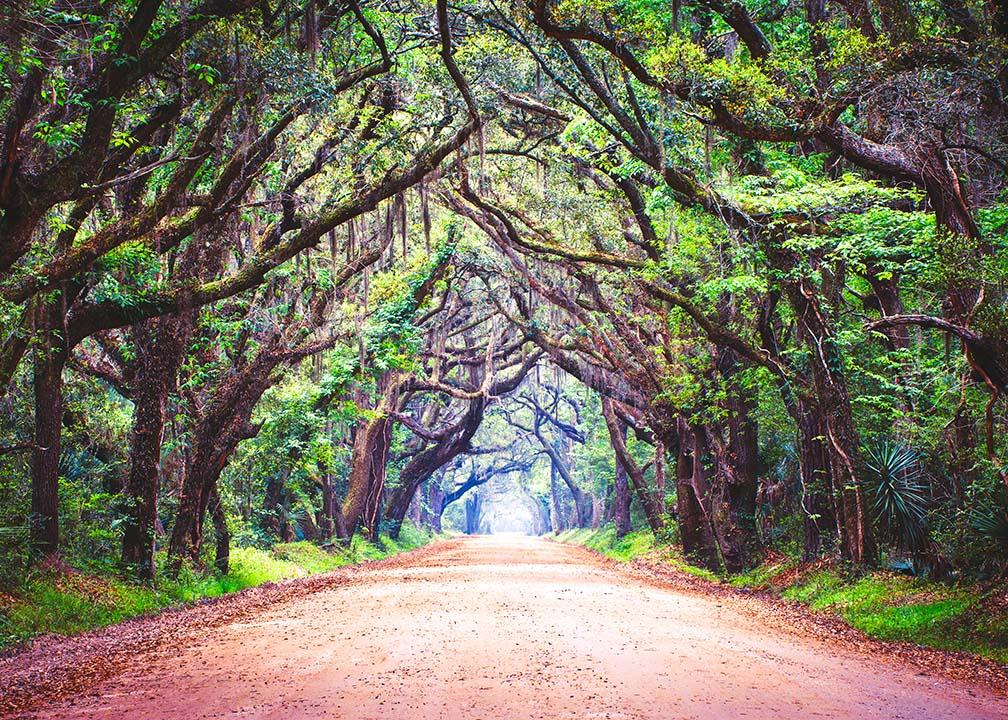 south_carolina_trees_and_road_istock.jpg